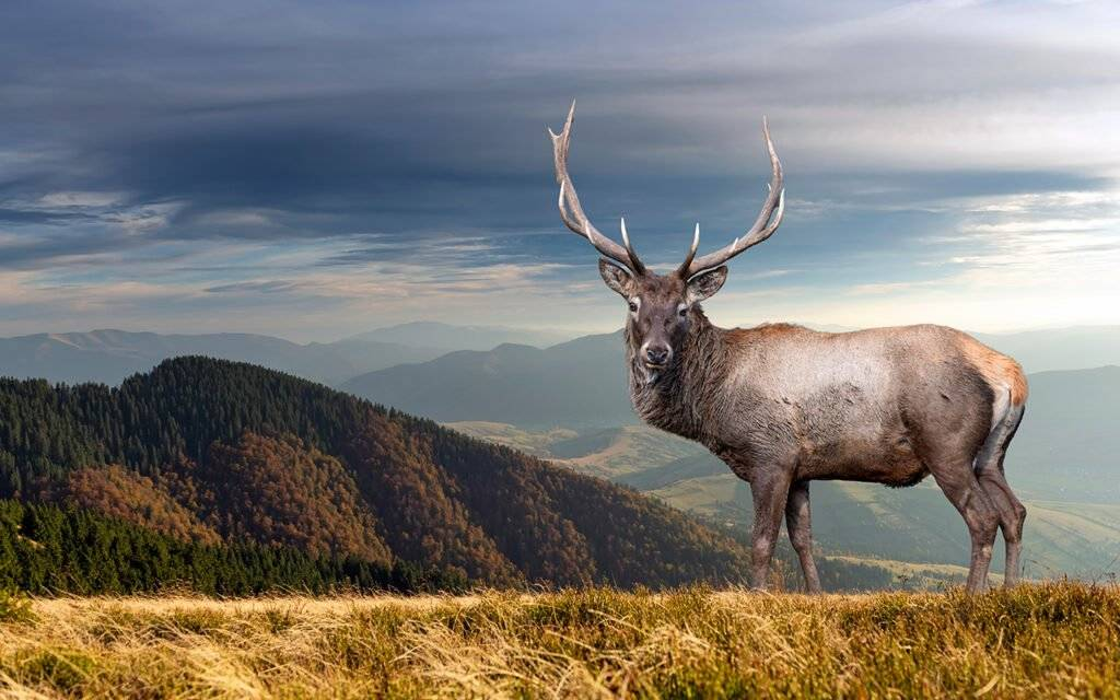 where to see wildlife in scotland